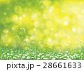カモミール フラワー 花のイラスト 28661633