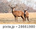 二頭 動物 野生の写真 28661980