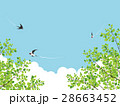 新緑(若葉) 28663452