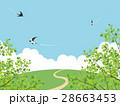 新緑(若葉) 28663453