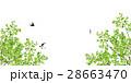 新緑(若葉) 28663470