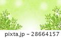 若葉 28664157