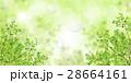 若葉 28664161