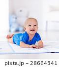 ベビー 赤ちゃん 赤ん坊の写真 28664341