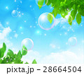 若葉 新緑 空のイラスト 28664504