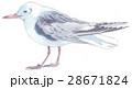 かもめ 鳥 海鳥のイラスト 28671824