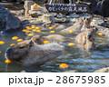 入浴 ゆず湯 伊豆シャボテン公園の写真 28675985