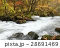 10月 石ヶ戸の瀬-紅葉の奥入瀬渓流- 東北の秋  28691469