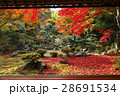 11月 紅葉の徳源院 近江の秋景色 28691534