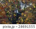 11月 紅葉の鳴子峡 東北の秋 28691555