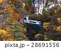 11月 紅葉の鳴子峡 東北の秋 28691556