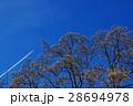 膨らむ花木の蕾と青空に伸びゆく飛行機雲 春近し 28694978
