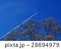 膨らむ花木の蕾と青空に引かれた飛行機雲 春近し 28694979
