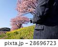 河津桜と男性 28696723
