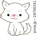 ペルシャ猫 白 28706581