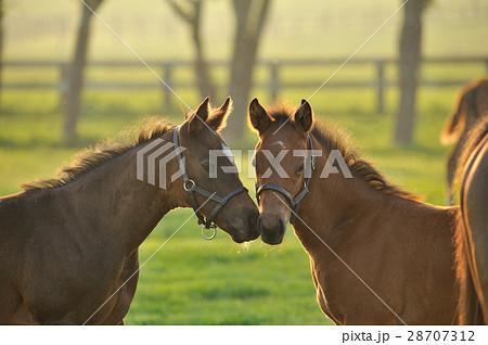 駿馬の写真素材 [28707312] - PI...