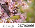 鳥 花 小枝の写真 28708066