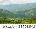 森林 林 森の写真 28708648