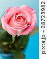 薔薇の花 28723982