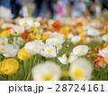 花びら ポピー アイスランドポピーの写真 28724161