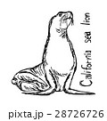 California sea lion - vector illustration sketch  28726726
