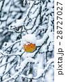 厳寒 ゆき スノーの写真 28727027