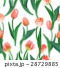 Floral seamless pattern. Realistic tulips with 28729885