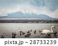 鳥 湖 山の写真 28733239