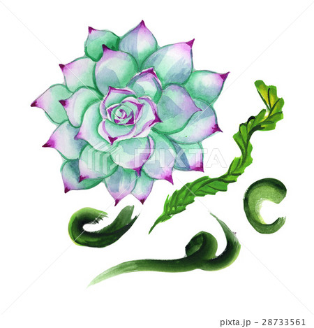 Wildflower succulentus flower in a watercolorのイラスト素材 [28733561] - PIXTA