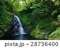 赤目四十八滝 滝 新緑の写真 28736400