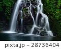 赤目四十八滝 滝 夏の写真 28736404