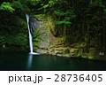 赤目四十八滝 滝 新緑の写真 28736405