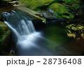 赤目四十八滝 滝 夏の写真 28736408