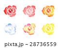 バラの花 28736559