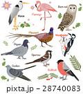 鳥 組み合わせ ベクタのイラスト 28740083