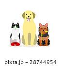 犬と猫の小グループ ペットサービス 28744954