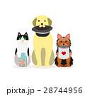 犬と猫の小グループ 募金 28744956