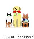 犬と猫の小グループ 家 28744957