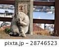 尾道の公園で出会った猫と遠くに見える尾道水道 28746523
