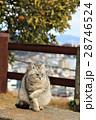 坂の上の公園で出会ったモフモフのねこ~広島県尾道市~ 28746524