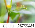 花 芽 蕾の写真 28755884