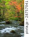 奥入瀬渓流 奥入瀬川 河川の写真 28757041