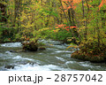 秋の奥入瀬渓流 28757042