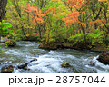 秋の奥入瀬渓流 28757044