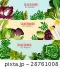 ベジタブル 野菜 サラダのイラスト 28761008