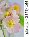 お花 フラワー 花の写真 28764166