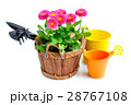 Marguerite flowers and garden tools 28767108