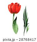 水彩画 お花 フラワーのイラスト 28768417