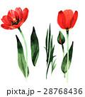水彩画 お花 フラワーのイラスト 28768436