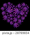 Heart of Bright Blue cannabis sativa leaves 28769834